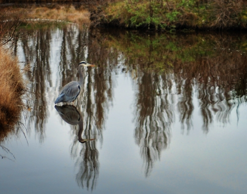 birdbath13